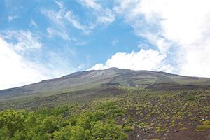 富士山五合目植生
