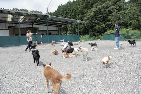 犬たちはのどかな環境で仲良く暮らしている